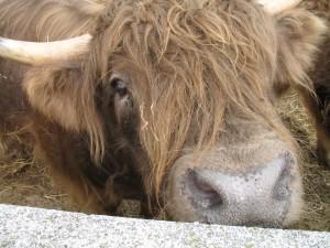 Good beef. No bull.