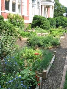 There are several varieties of each type of herb planted at Sheppard Mansion.