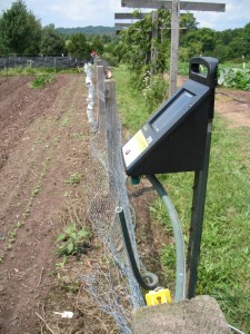 The solar-powered electric fence will hopefully allow more of the vegetables from the farm to go into human bellies instead of deer bellies.